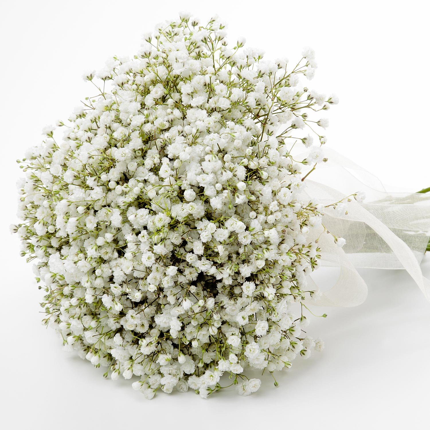 Farm Fresh Natural Million Star Gypsophilia - 8 Bunches