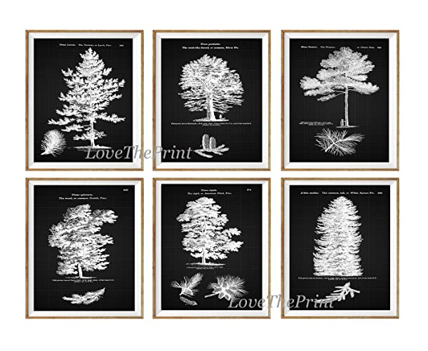Amazon.com: Pine Tree Print Set of 6 Prints Antique Beautiful ...