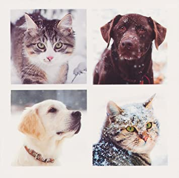animal charity christmas cards pack of 10 assorted animals dogs and cats design - Animal Charity Christmas Cards