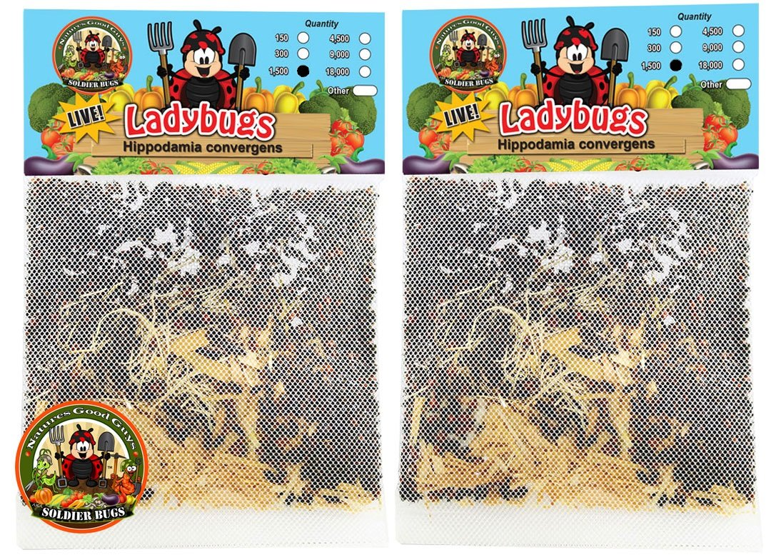 Nature's Good Guys 3000 Live Ladybugs - (2 X 1500 Live Ladybugs) - Guaranteed Live Delivery!