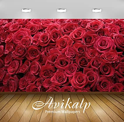 Buy Avikalp Exclusive Awi3268 Red Roses Flowers Full Hd
