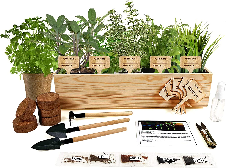 Hand-Mart 5 Herb Seeds Window Garden Starter Kit,Cilantro Arugula Sage Chives Dill, Including Everything-Soil,Pots,3 Garden-Tool,Pruner,Sprayer,Plant Labels,Planter,Gardening Gift for Kids Adults