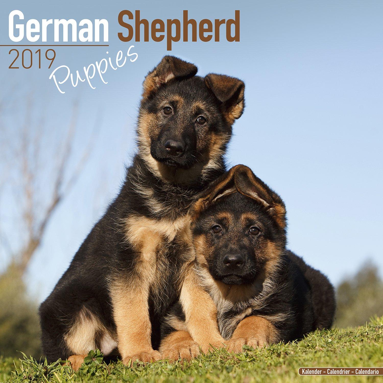 German Shepherd Puppies Calendar Dog Breed Calendars 2018 2019