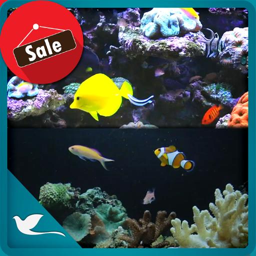 Coral Fish Aquarium TV