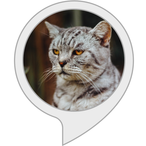 Custom API - Cat Facts, used for sale  Delivered anywhere in Canada