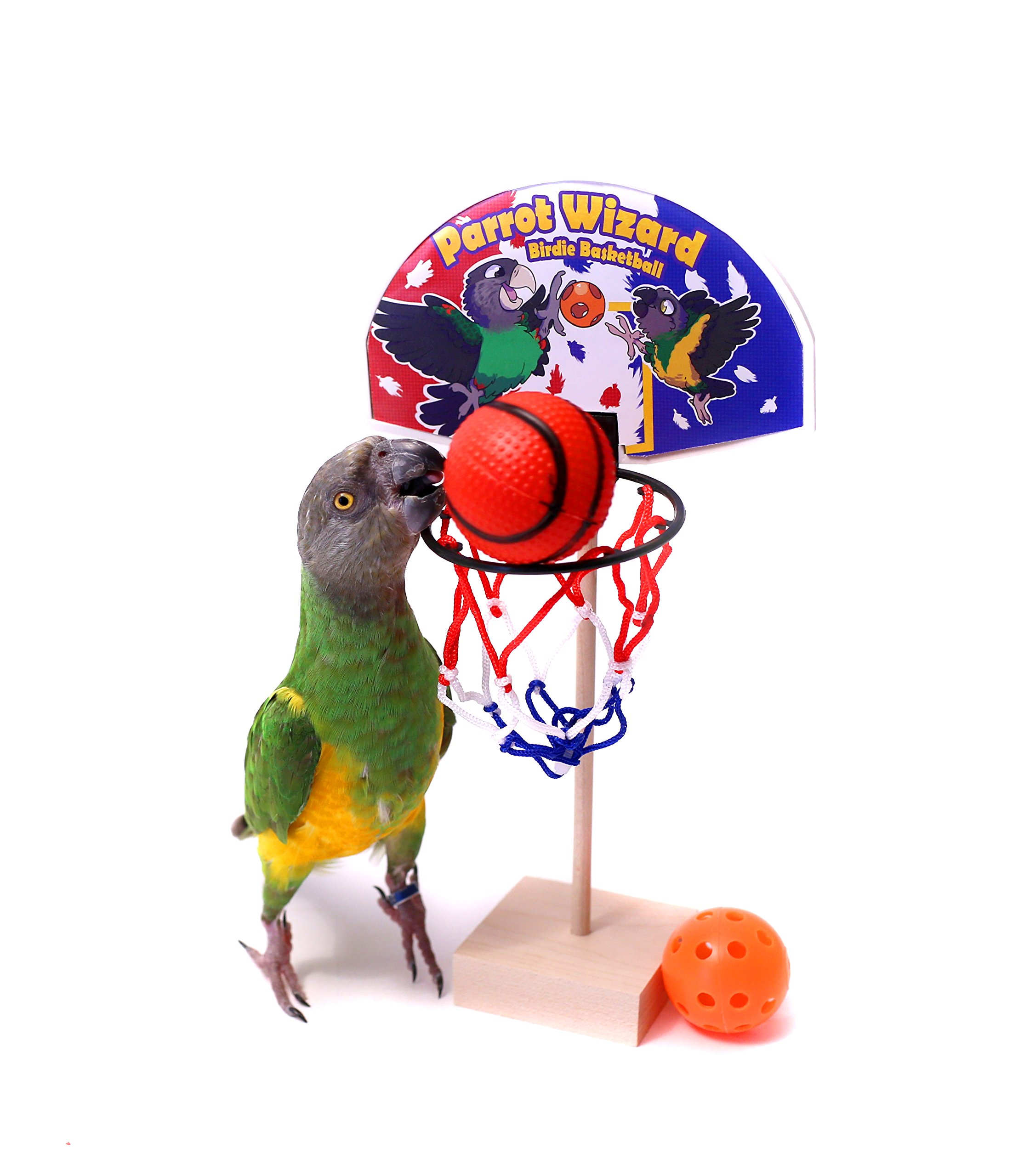 Birdie Basketball - Adjustable Height Parrot Basketball Trick Prop by Parrot Wizard
