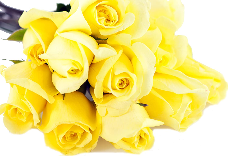 Amazon Kabloom Bouquet Of Sunshine Yellow Roses 12 Fresh Cut