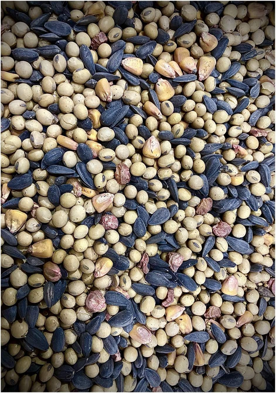 Crooked Bend 25lb Food Plot Seed   Soy Beans Peredovik Sunflowers Sugar Buns Corn Red Clover Crimson Clover Mix   Basic Buck Blend   for Whitetail Deer and Other Wildlife