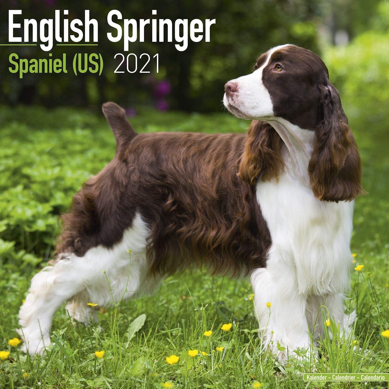 Amazon Com English Springer Spaniel Calendar 2021 Dog Breed Calendar Wall Calendar 2020 2021 Office Products