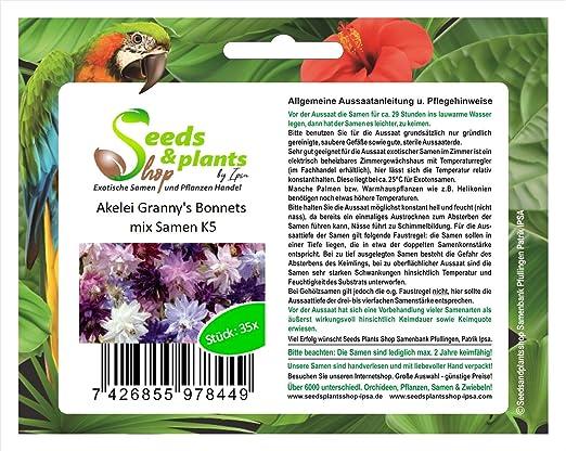 40 planta jardín de la abuela de Columbine capos mix semillas semillas nuevo K5: Amazon.es: Jardín