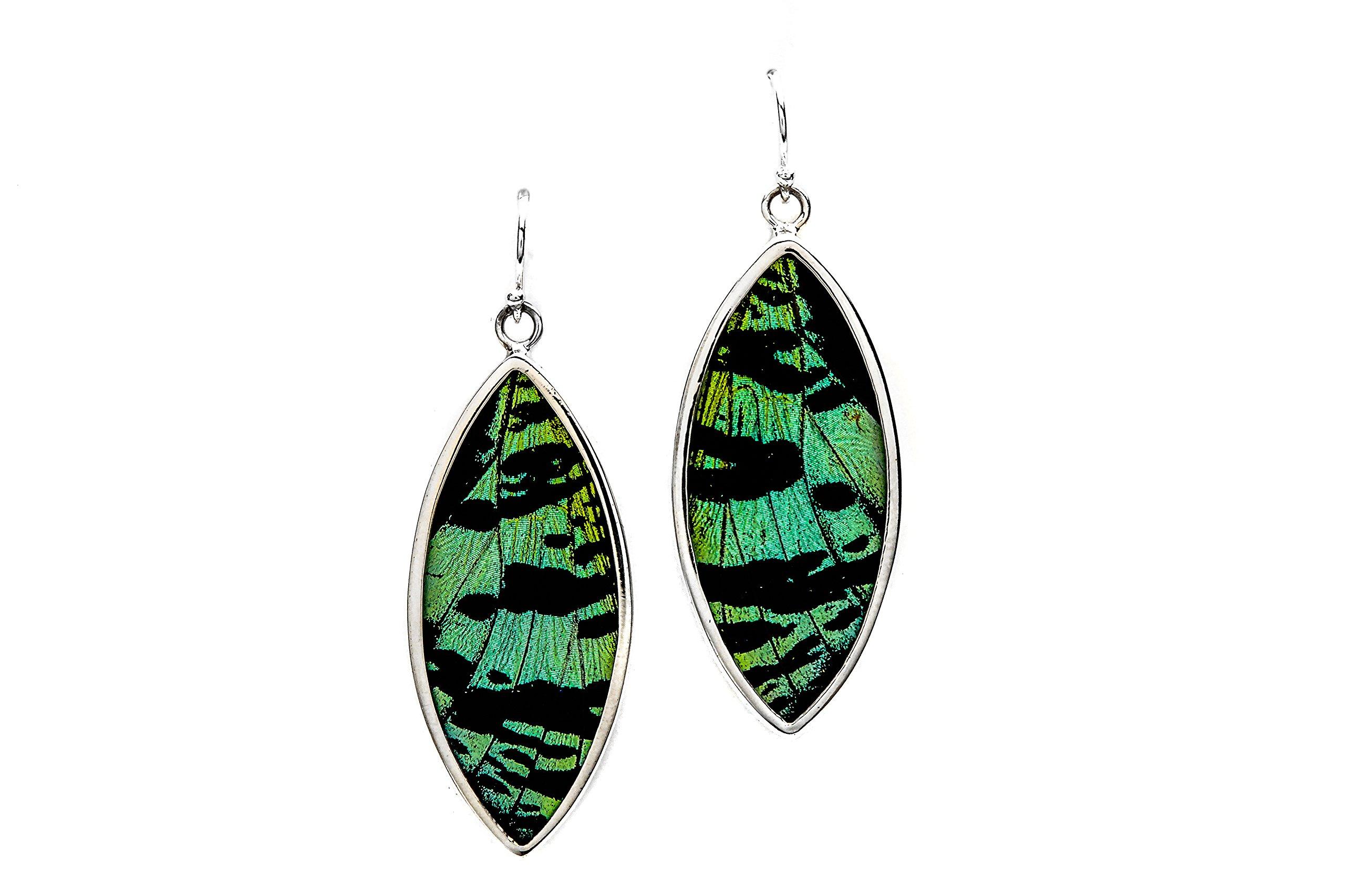 Real Butterfly Wing Earrings in Sterling Silver - Style #8