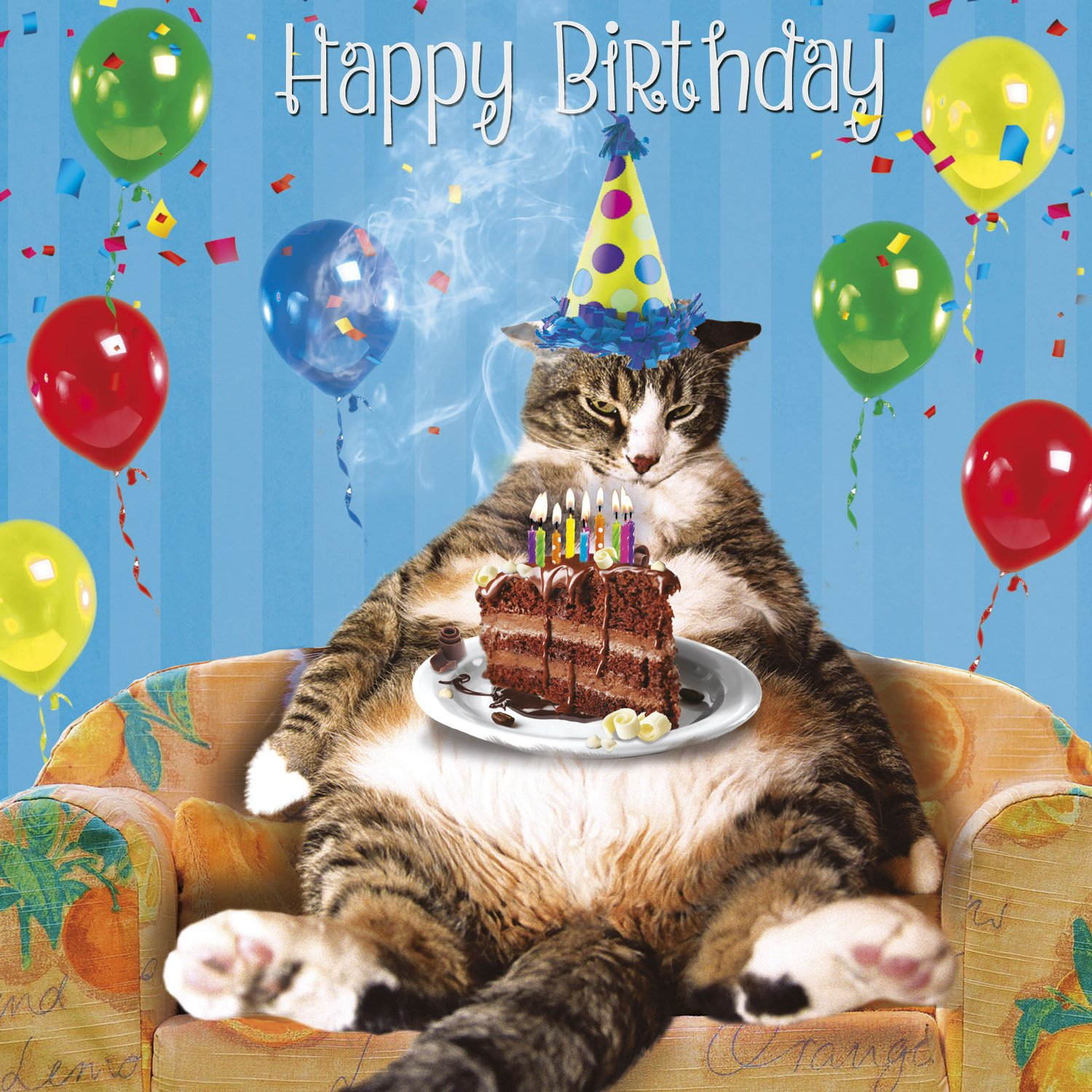 Fat Cat Cake Birthday Card Laid Back Birthday Amazon