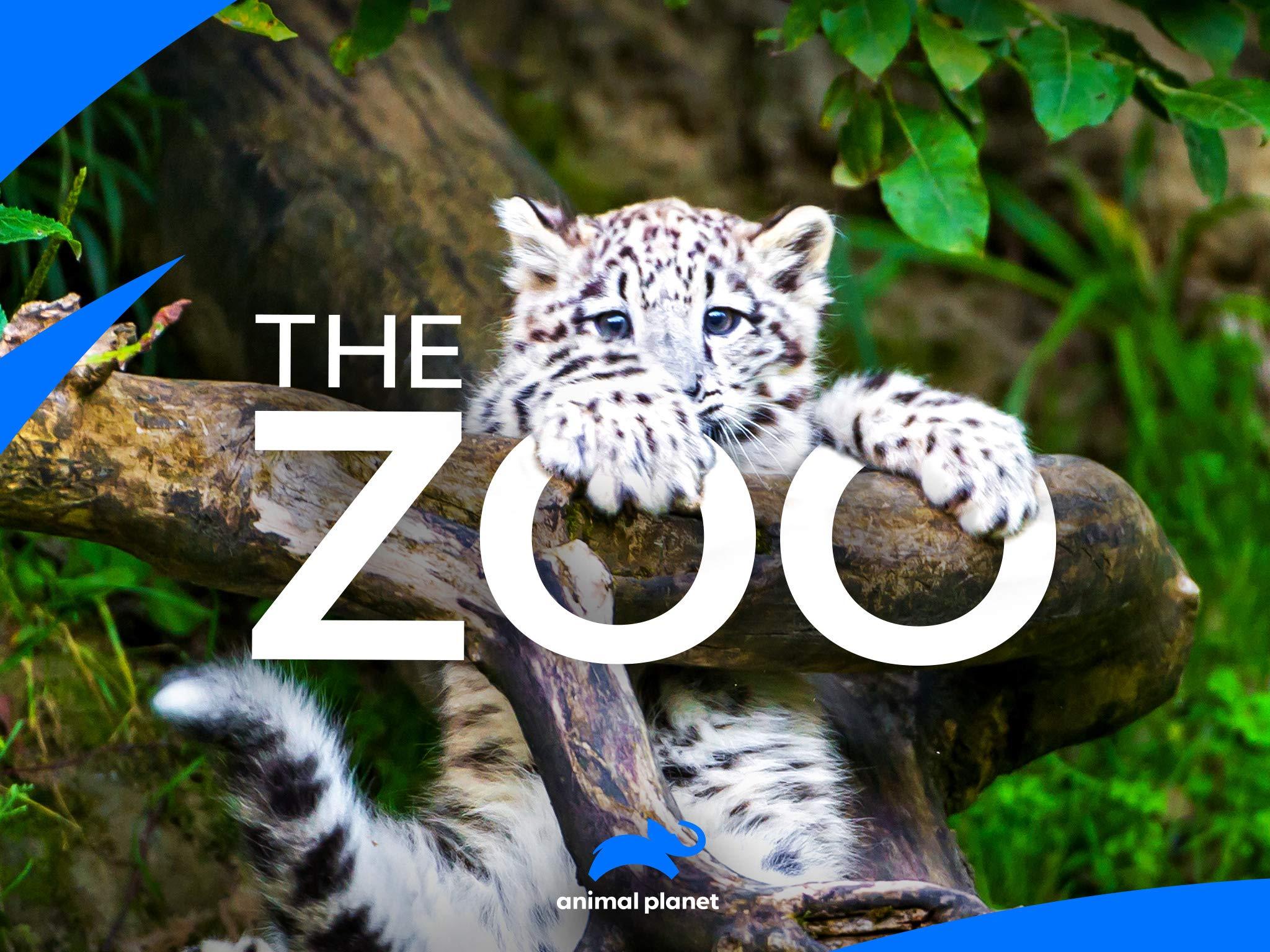 zoo season 3 episode 2 online free