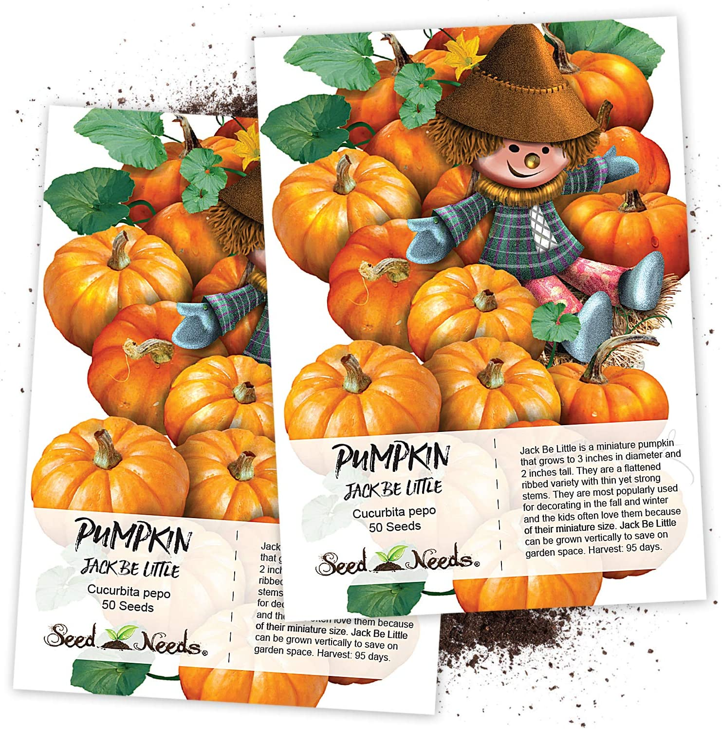 Seed Needs, Jack Be Little Pumpkin (Cucurbita Pepo) Twin Pack of 50 Seeds Each Non-GMO