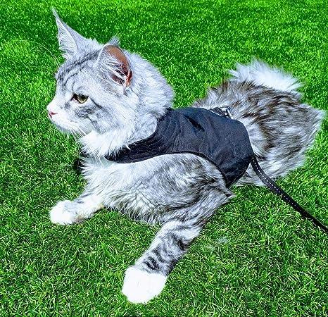 Mynwood - Arnés para Gato (hasta 8 Meses), Color Negro