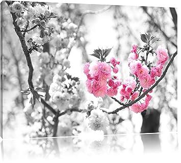 fleurs de cerisier gicler gratuit chaud noir chatte porno