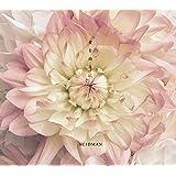 愛を両手に(初回限定盤)(DVD付)