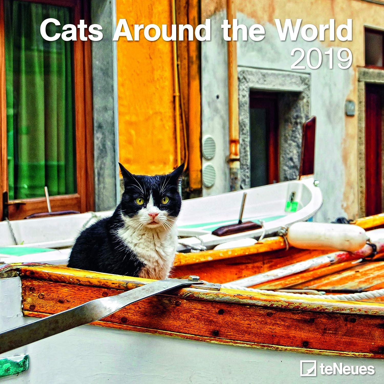 Calendario 2019 gato alrededor del mundo – griegas – Egipto – Túnez – gatito – formato 30 x 30 cm (TN) + incluye un – Agenda de bolsillo 2019: Amazon.es: Oficina y papelería