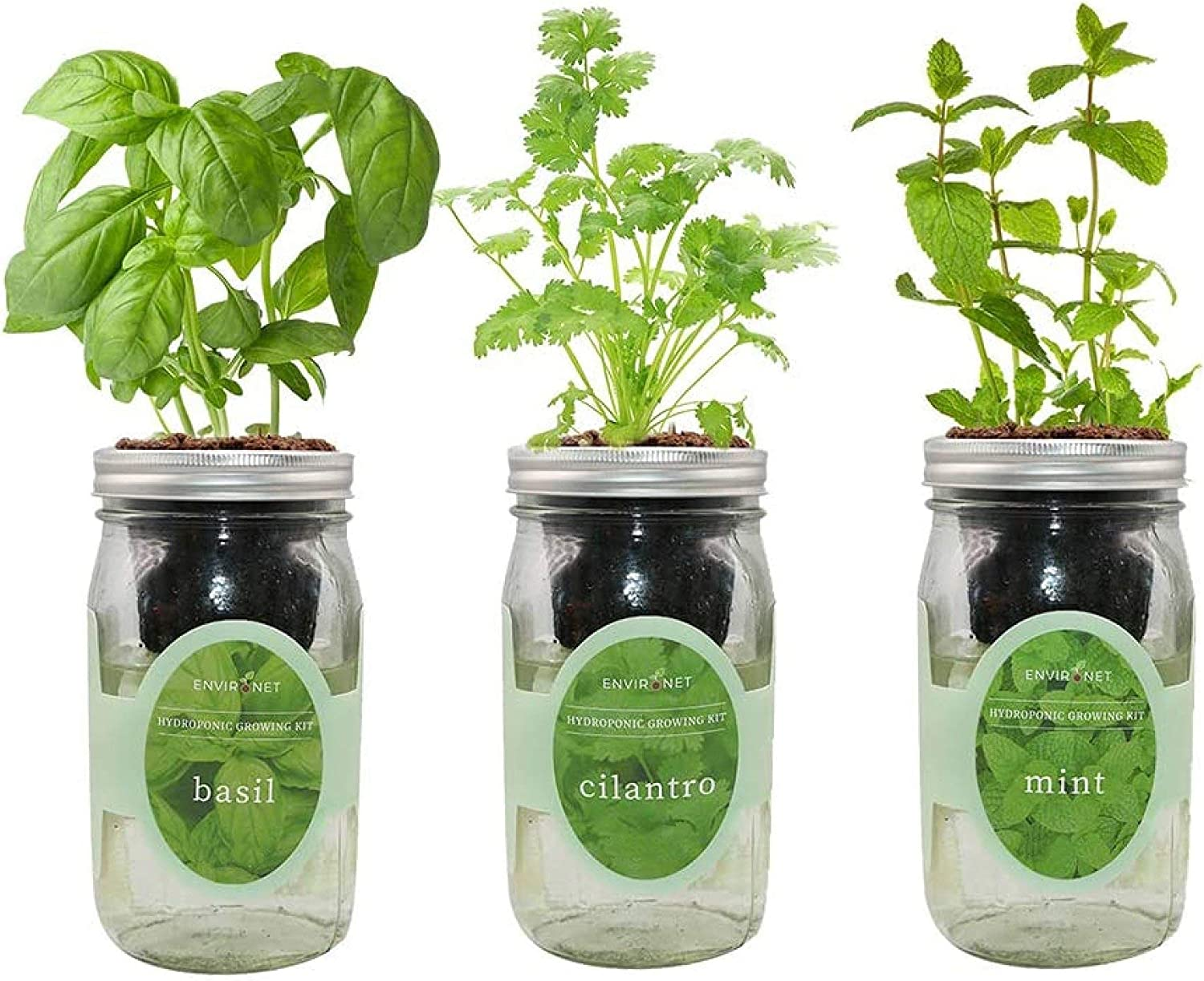 Environet Hydroponic Herb Growing Kit Set, Self-Watering Mason Jar Herb Garden Starter Kit Indoor, Grow Your Own Herbs from Seeds (Basil, Cilantro and Mint)