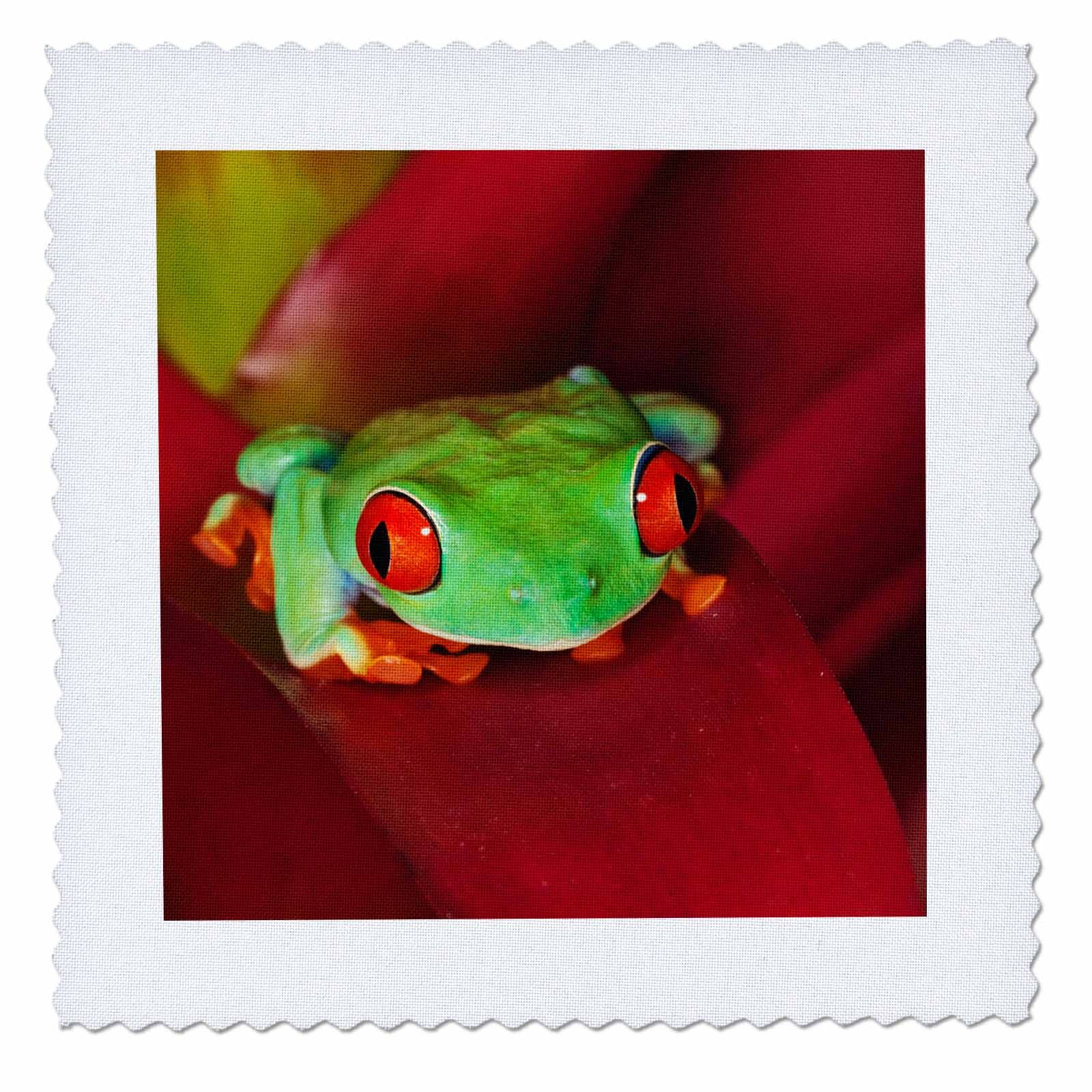 3dRose Danita Delimont - Frogs - South America, Panama. Red eyed tree frog. - 20x20 inch quilt square (qs_278319_8)