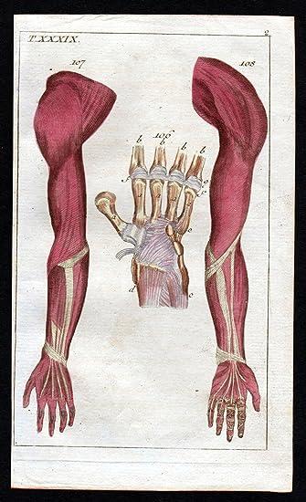 Grafik Handwurzel carpus arm hand Anatomie anatomy Medizin medicine ...
