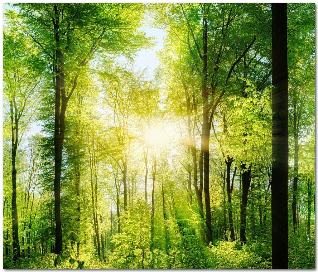 K/üchenr/ückwand Waldlichtung Premium Hart-PVC 0,4 mm selbstklebend Direkt auf die Fliesen Gr/ö/ße:Materialprobe A4
