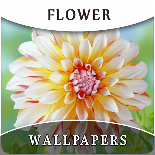 HD Flower Wallpapers And Background