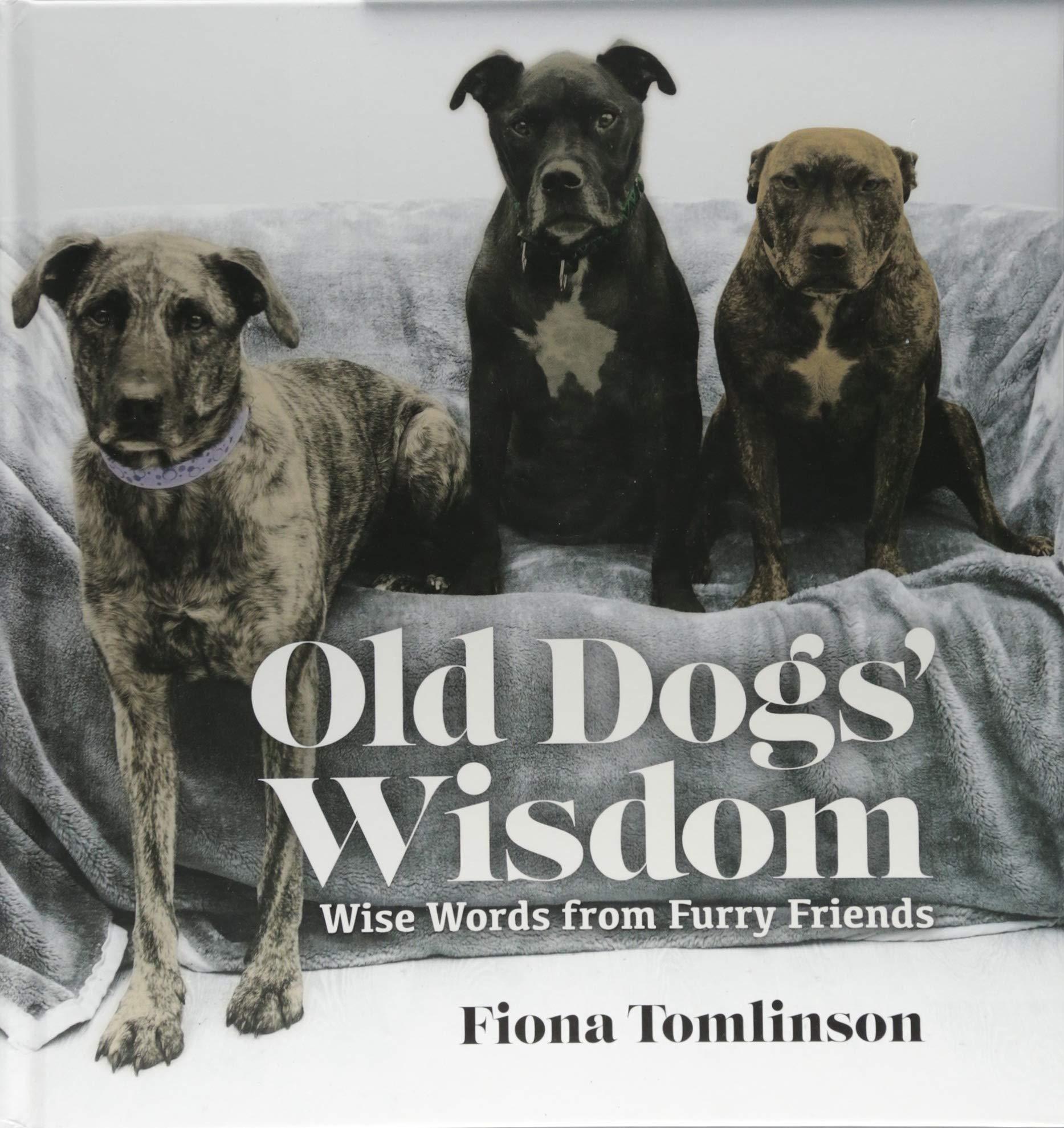 Old Dog Wisdom