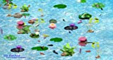 Interactive Fish Pond Game [Download]