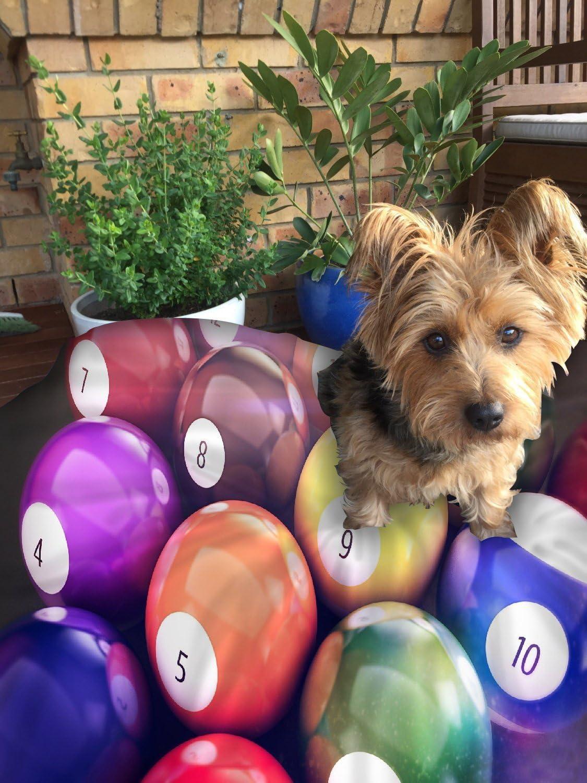 Snoogg Billar bolas perro cama mascotas suministros grande extra ...
