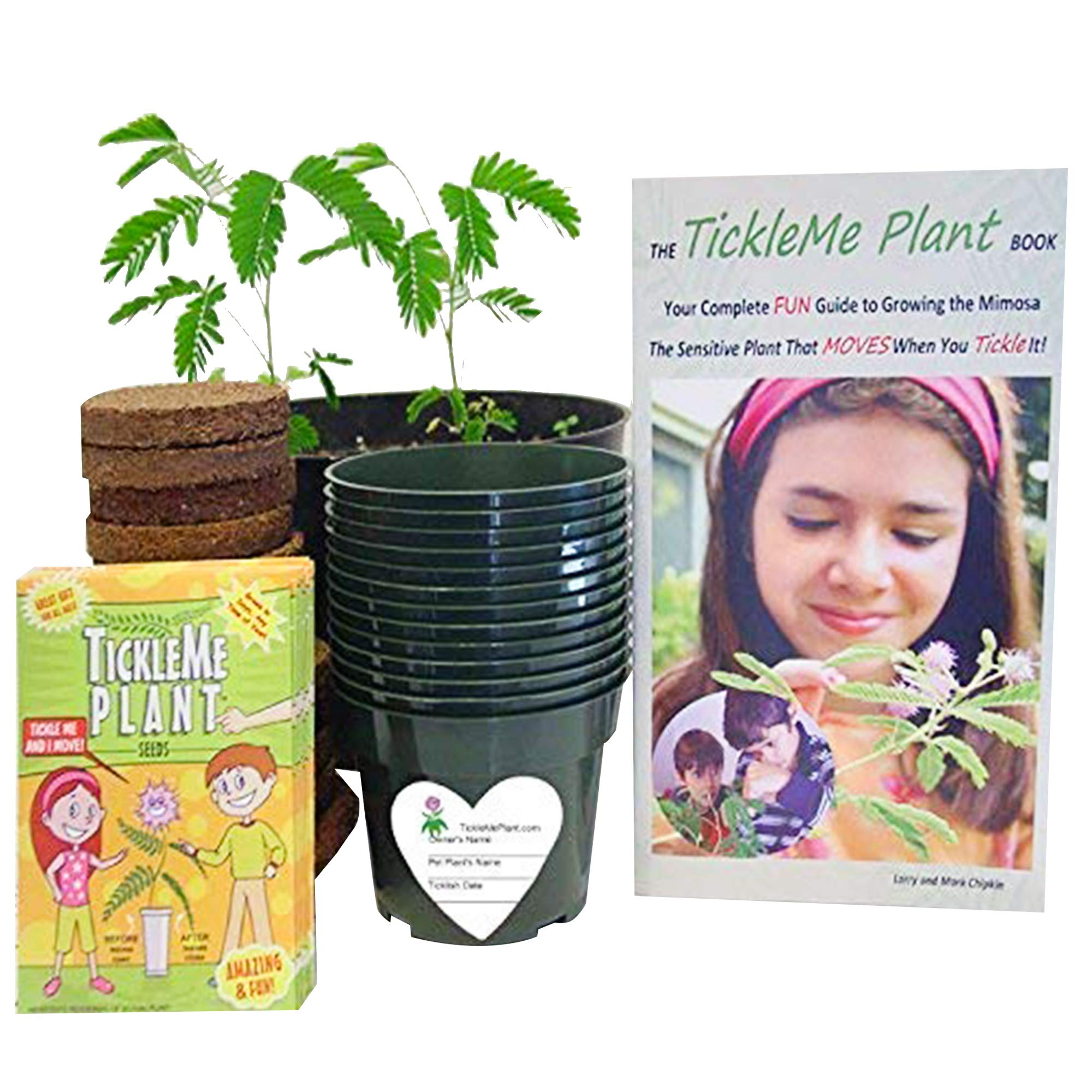 TickleMe Plant Classroom or Science Party kit - Grow The House Plant That Closes Its Leaves When You Tickle It. Includes Activity Book - Supplies for 30 Students by TickleMe Plant