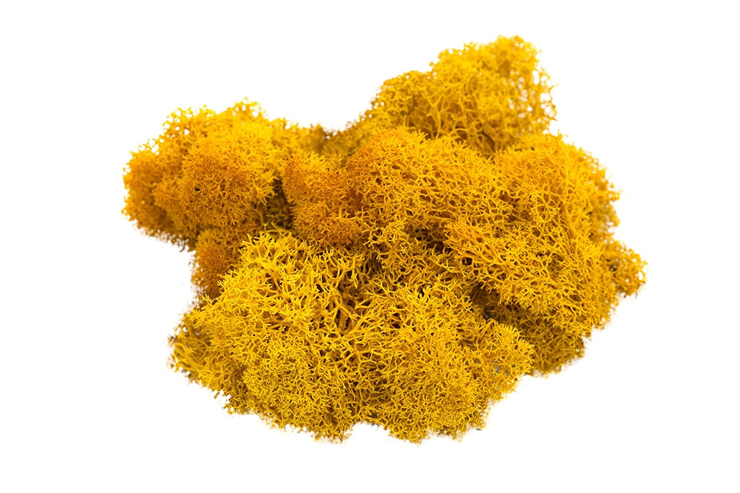Reindeer Moss Preserved | Orange Moss | For Fairy Gardens, Terrariums, or any Craft or Floral Project | Nautical Crush Trading TM (2 Ounces) NCTS6631