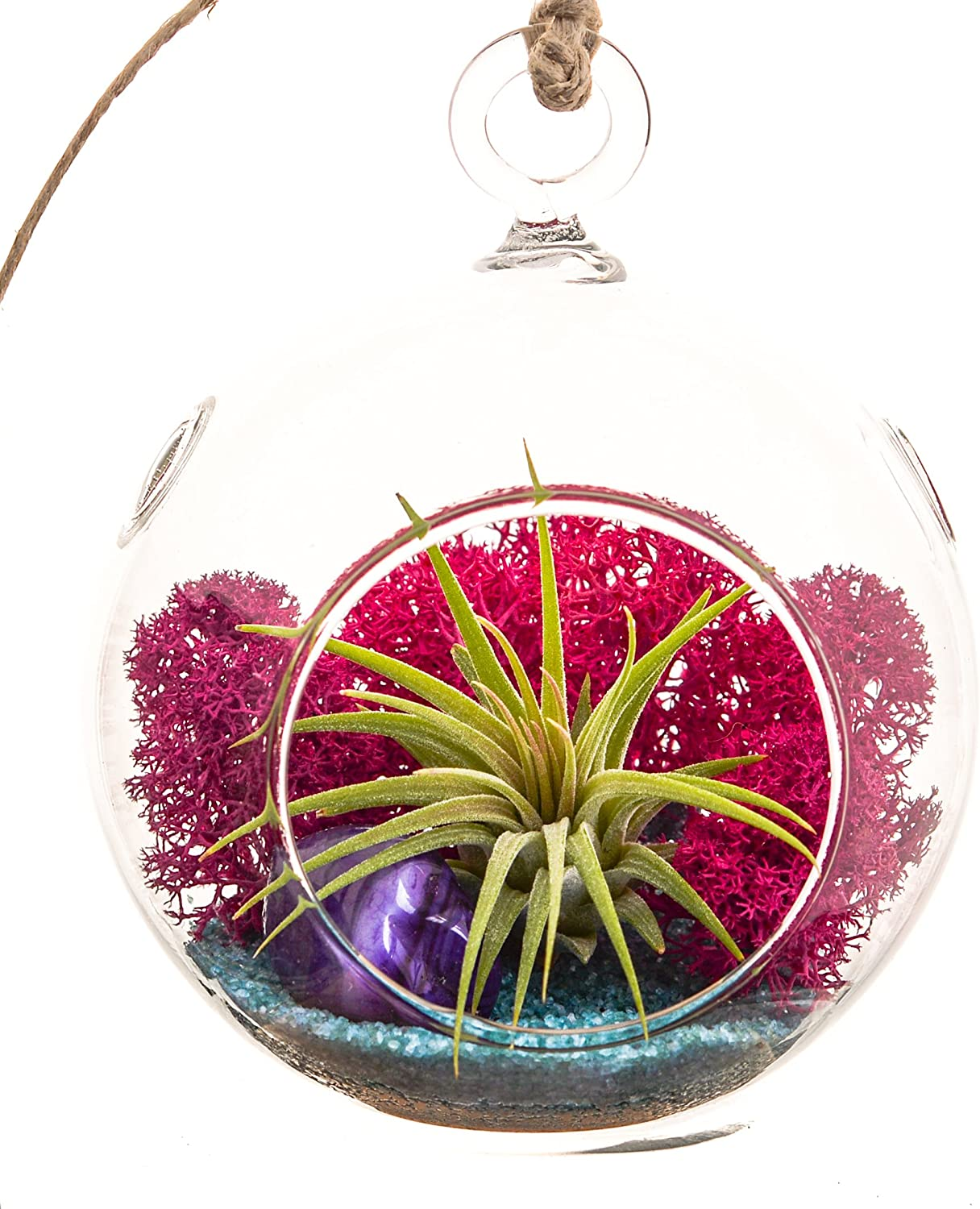 Bliss Gardens Mini Air Plant Terrarium with 3 Round Glass, Fuchsia Moss, Turquoise Sand and Purple Agate