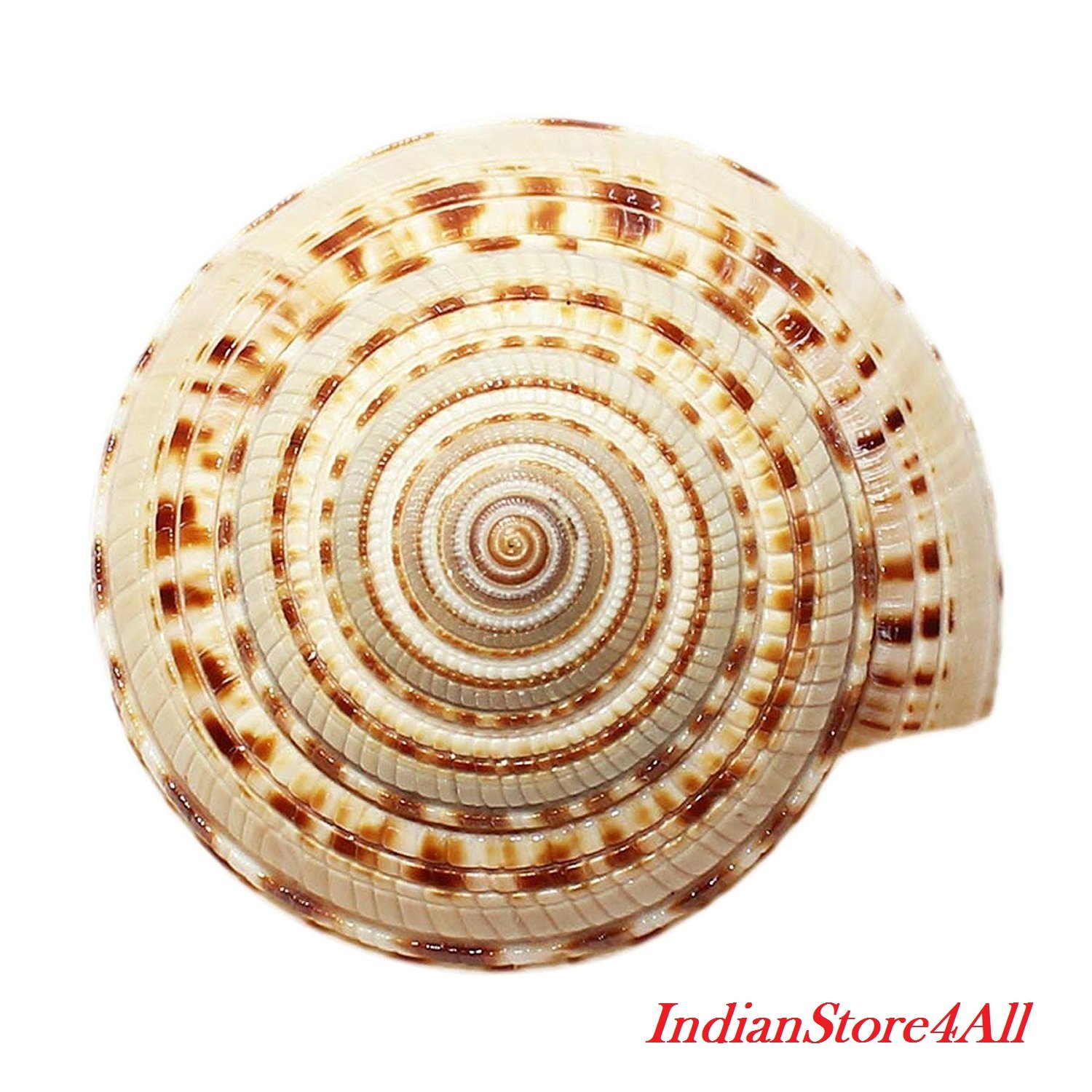 IndianStore4All Vishnu Sudarshan Chakra Shankh 0.75 To 1 Inches Approx