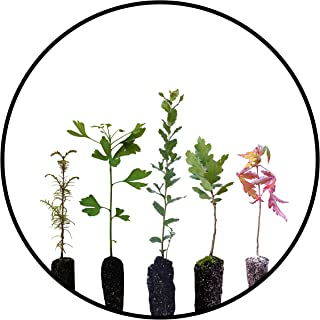 product image for Bonsai Tree Bundle | Collection of 5 Live Tree Seedlings | The Jonsteen Company