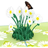 Lovepop Daisy Patch Pop Up Card, 3D Card, Greeting Card, Mother's Day Card, Spring Card, Summer Card, Birthday Card, Flower Card, Appreciation Card