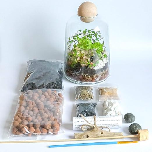 Concretelab&co - Kit de terrario de cristal transparente hecho a mano con parte superior de madera redonda para bricolaje, mini jardín con musgo Fittonia de 19 cm de altura, Terrarium Kit Only: