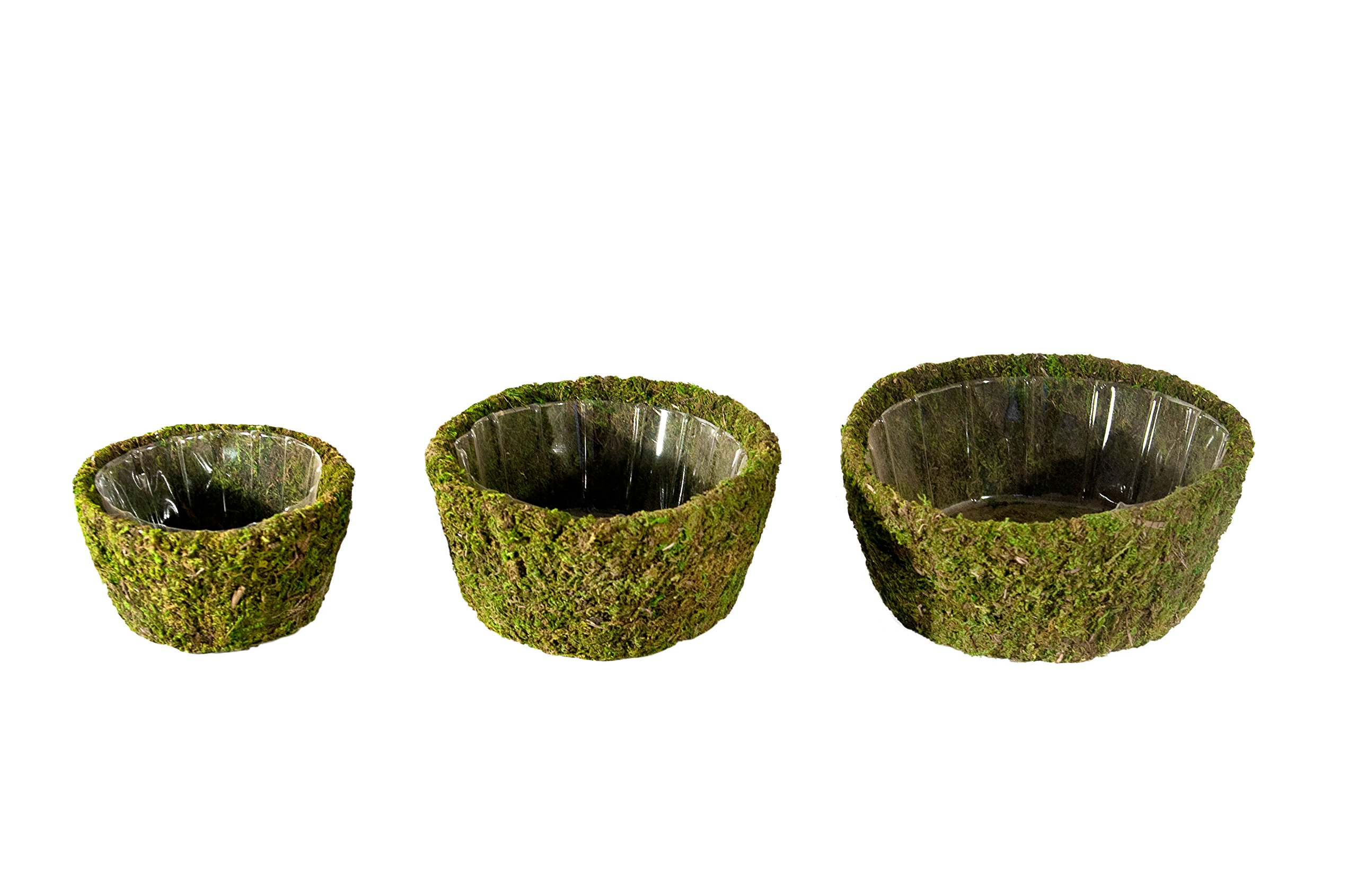 Super Moss (55100) Roseville, Fresh Green, Set of 3 (S/M/L) by Super Moss (Image #1)