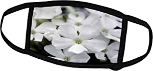 3dRose Macro Photograph of White Phlox Blooming in a Garden. - Face Covers (fc_316773_3)