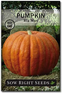 Sow Right Seeds - Big Max Pumpkin Seed for Planting - Non-GMO Heirloom Packet with Instructions to Plant a Home Vegetable Garden - Great Gardening Gift (1)