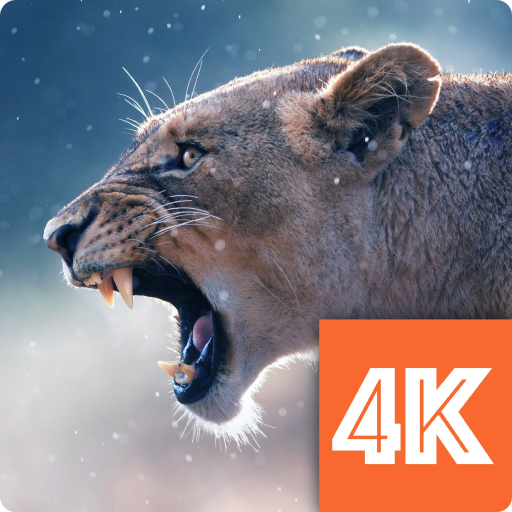 Animals Wallpapers 4k Amazones Appstore Para Android
