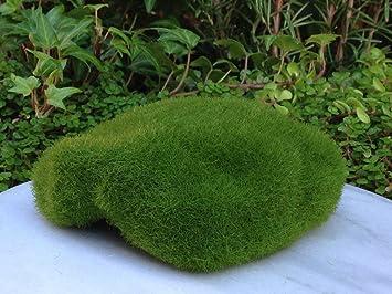 miniature fairy garden terrarium mini moss styrofoam display stone - Fairy Garden Terrarium