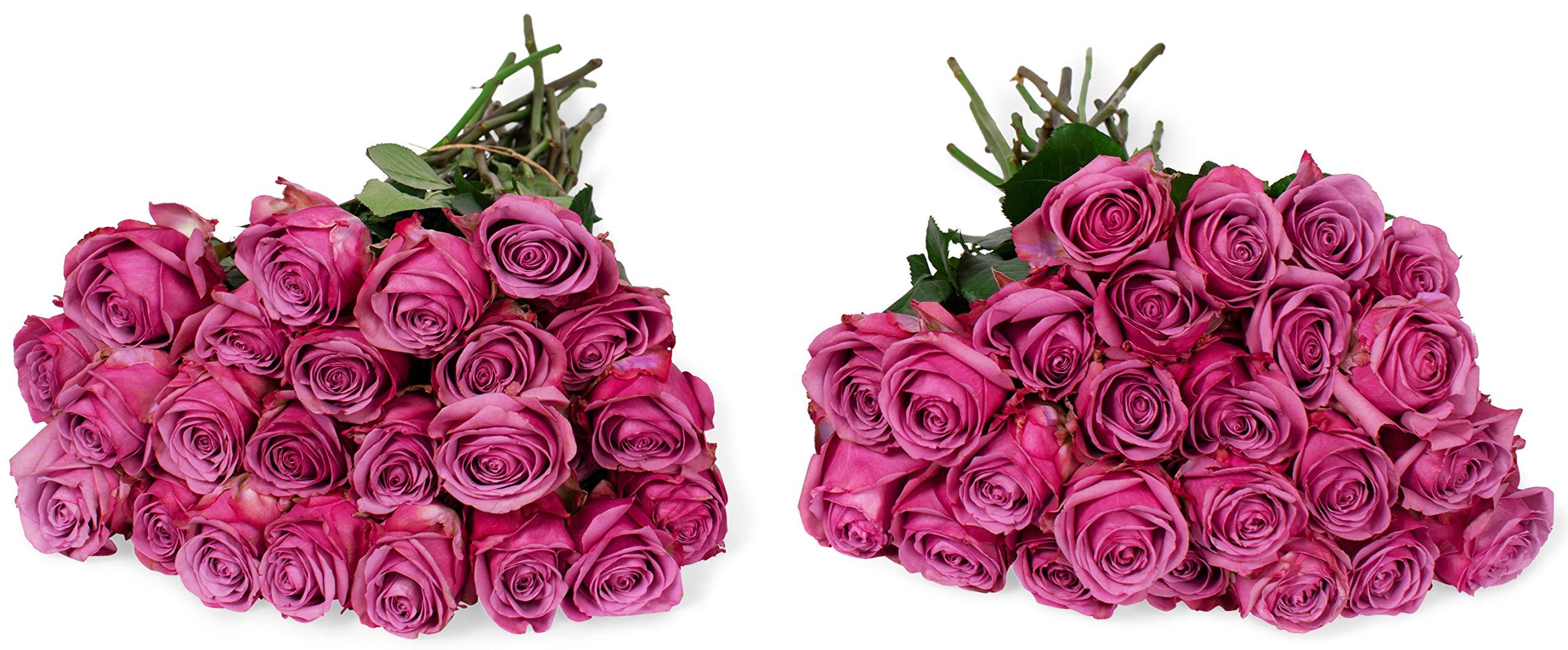Benchmark Bouquets 50 Lavender Roses Farm Direct (Fresh Cut Flowers)
