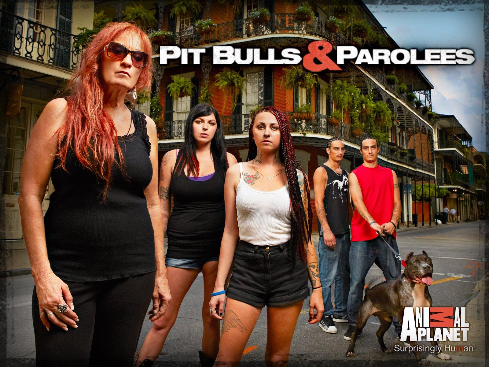 pit bulls & parolees season 9 episode 22