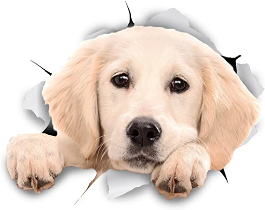 Winston & Bear 3D perro pegatinas - Pack 2 - leerlo Labrador ...