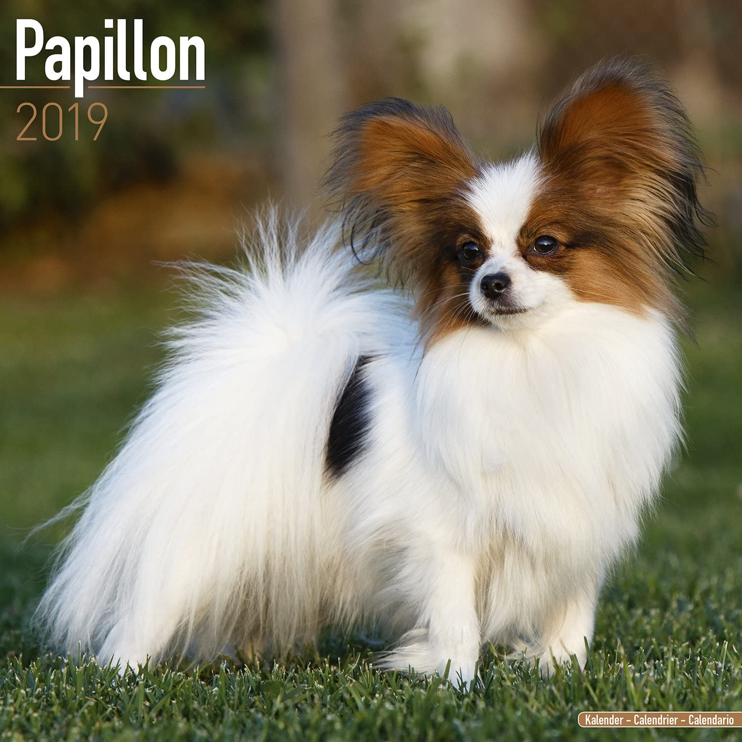 Papillon Calendar - Dog Breed Calendars - 2018 - 2019 Wall Calendars - 16  Month by Avonside: MegaCalendars: 9781785803529: Amazon.com: Books