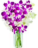 KaBloom Opal Orchids: Bouquet of 5 White Dendrobium Orchids & 5 Purple Dendrobium Orchids from Thailand with Vase
