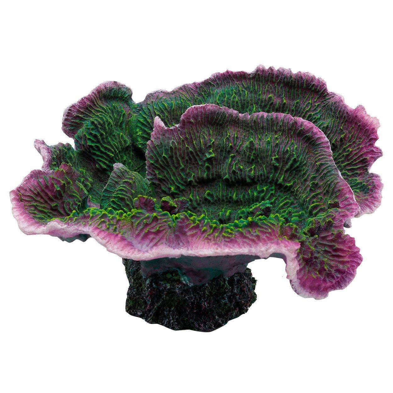 Underwater Treasures Montipora Coral - Purple Rim by Underwater Treasures