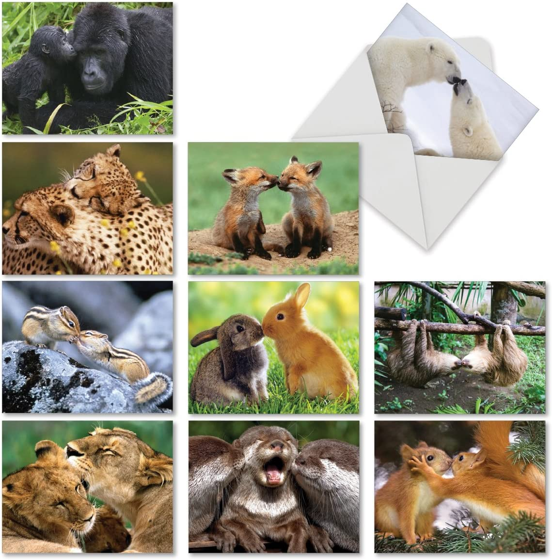 Animal Smackers - 10 Adorable Thank You Cards with Envelopes (4 x 5.12 Inch) - Cute Kissing Wildlife Gratitude Greeting Notecards - Nature Appreciation, Boxed Note Card Stationery M6594TYG