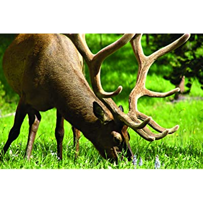 Southwest Transitional Big Game Food Plot Pasture Blend (0.5 Acre) : Garden & Outdoor